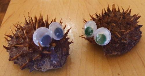 ChestnutHedgehogs