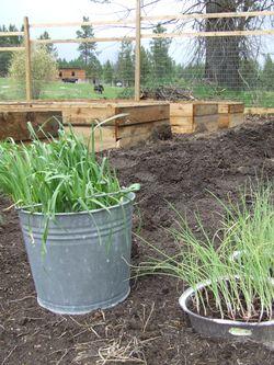 GardenMay2009e