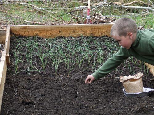 GardenMay2009g