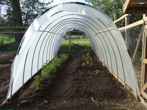 GardenJune2009c