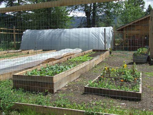 GardenJune2009j