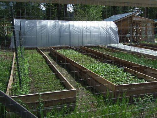 GardenJune2009i