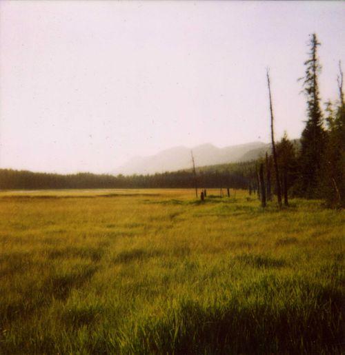 Polaroidsummer (2)