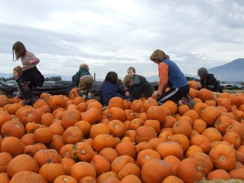 PumpkinPatch1