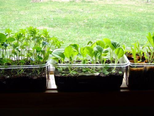 SeedlingsEverywhere2