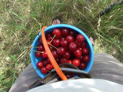 Cherrypicking4.5