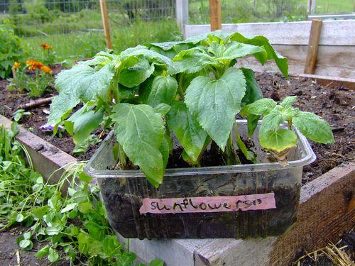 GardenTour5