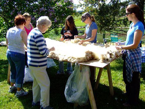 Shearing19