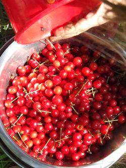 Cherrypicking6