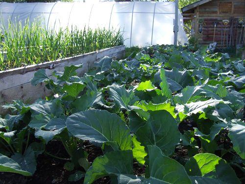 GardenTour1