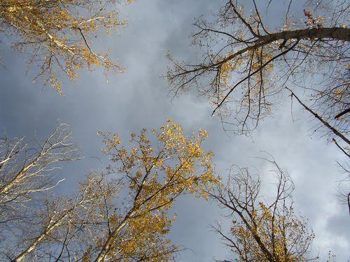 Lookingup