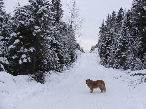 Narnia1.5