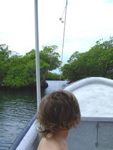 Mangrovesbyboat