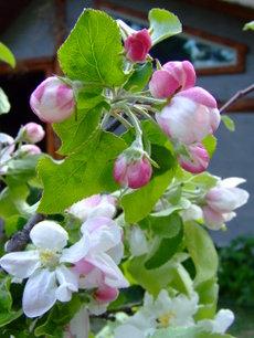 Gatheringflowers3