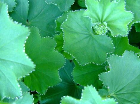 Springgreenwhite1