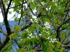 Springgreenwhite4_2