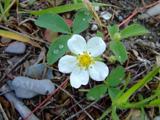 Springgreenwhite5_2