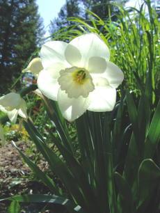 Springgreenwhite6_2