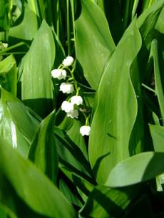 Springgreenwhite7_2