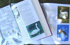 Swanbooks_2