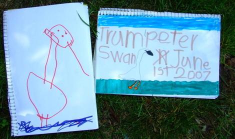 Swandrawings