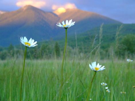 Focusonflowers