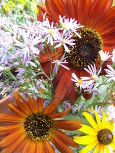 Sunflowersasters