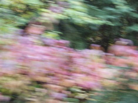 Autumn2007_25_2