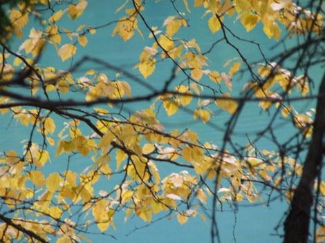 Autumn2007_30