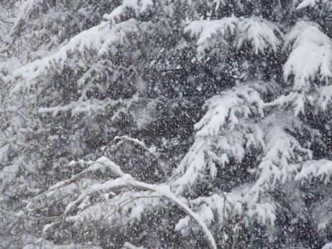 Snow1282008