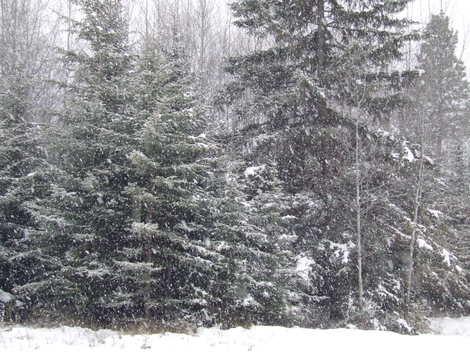 Winteroncemore