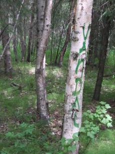 Anchoragegraffiti_1