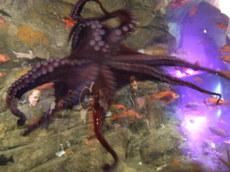 Aquarium4