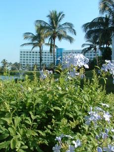 Blueflowers_1