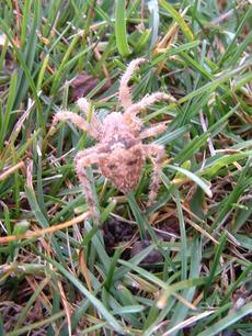 Cat_spider