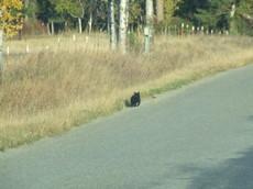 Countryblackcat