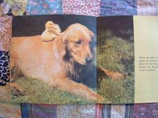 Dogandduckinbook