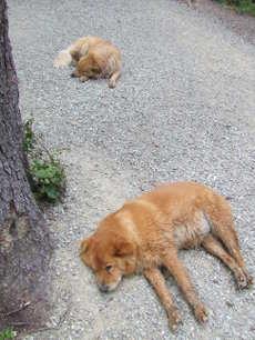 Dogstired