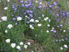 Hopepointflowers