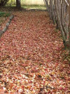 Mapleleafcarpet