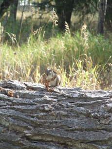 Squirrelingaway