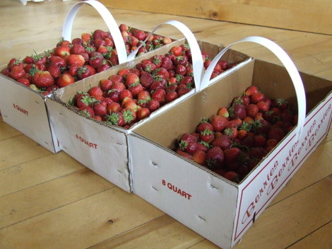 Strawberries2006