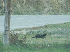 Towncat2