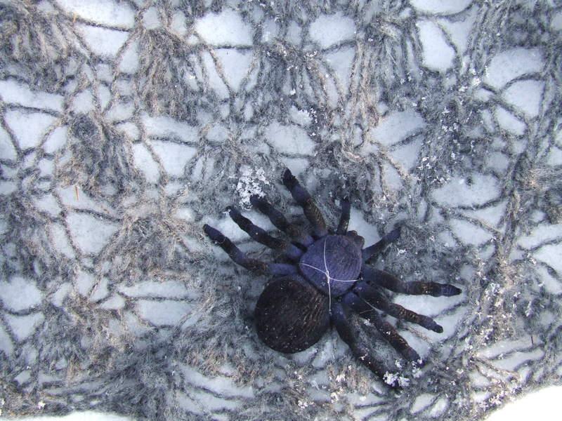 Knitting Iris: Spiderweb Capelet